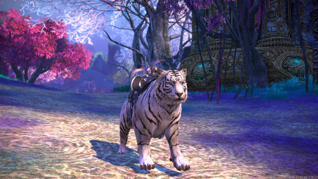 Tera fate of arun Tigre des Neiges